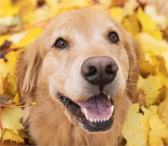 Looking for local dog parks?